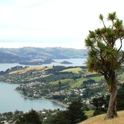 Iconic-Tours-Otago-Peninsula-06.jpg